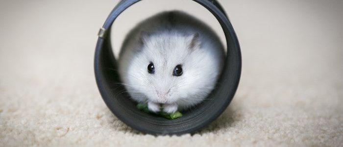 Comment faire un habitat pour hamsters