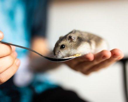 Comment bien nourrir son hamster ?